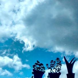 Testos: caputxina, farigola i aloe vera / Flowerpots: nasturtium, thyme and aloe vera
